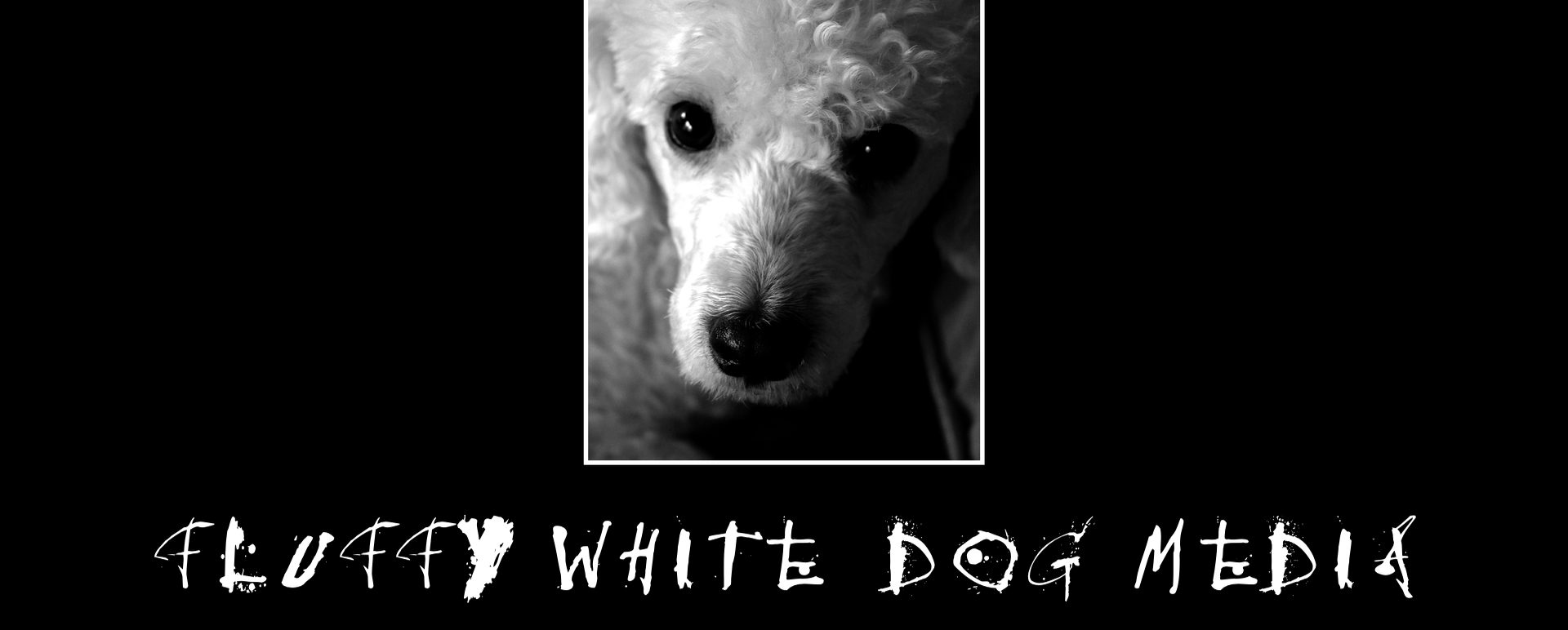 Fluffy White Dog Media